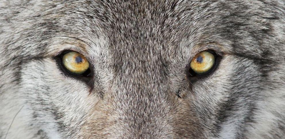 Élj szabadon és féktelenül, mint a farkas – üzenet minden nő számára
