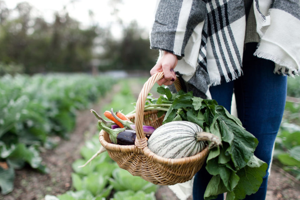 Hat étel mindennapos fogyasztásra a hosszú életért