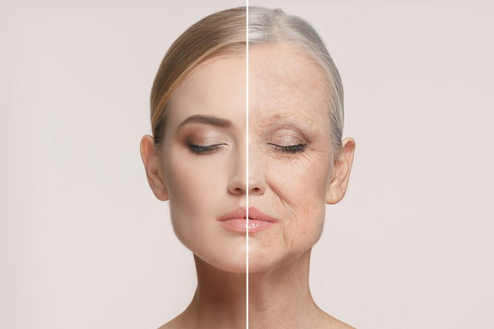 öregedés folyamata