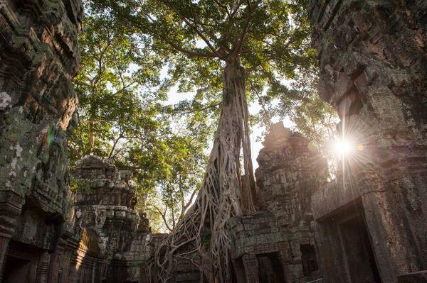 209. oldal: a Ta Prohm Kambodzsában