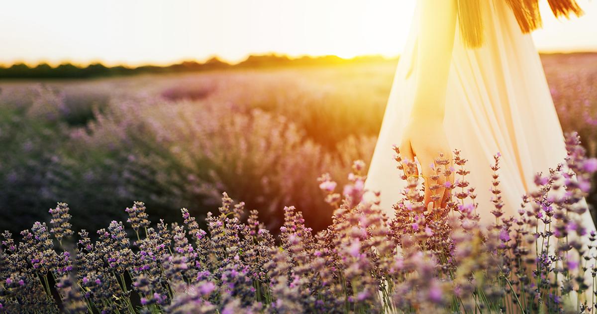 AZ ÉBREDÉS KÖNYVE – Napi útmutató egy szeretetteljesebb élethez